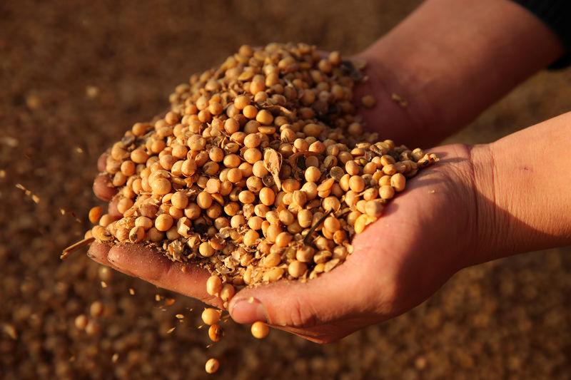 大豆现货上涨豆一期货创新高 原料上涨掀起水产饲料涨价潮